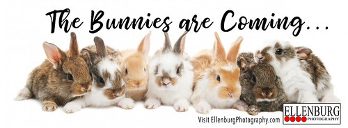 Bunnies are coming
