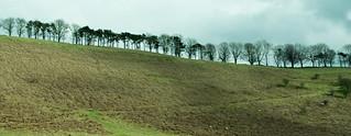 20170330-16b_Tree Lined Horizon_Levisham Moor