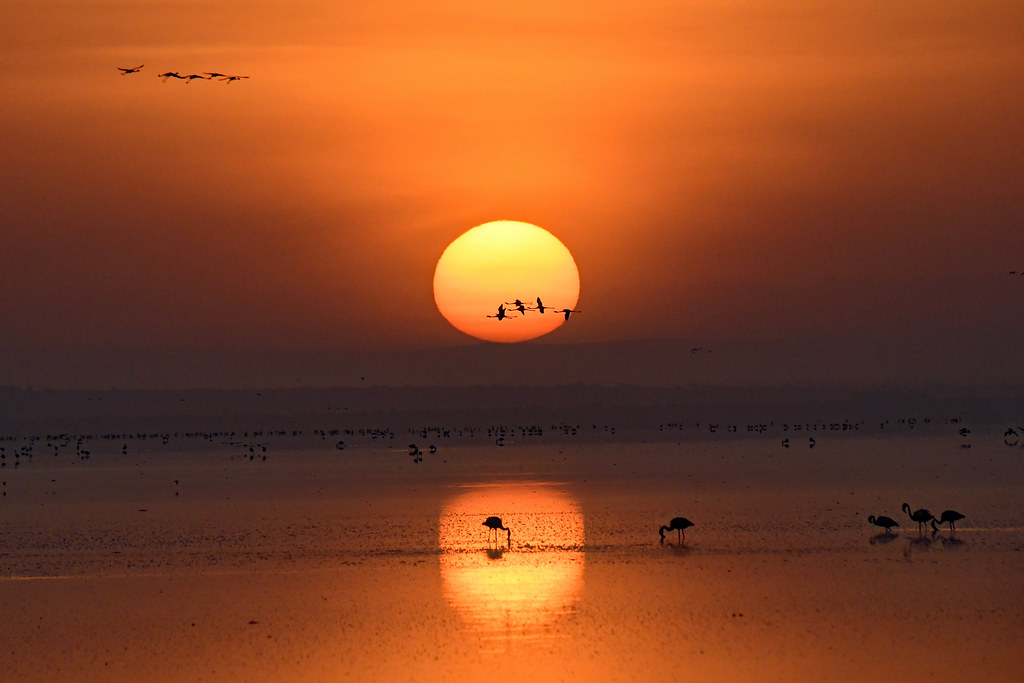 Sunrise at Lake Manyara with flamingos