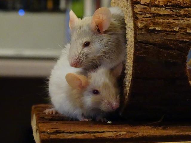 Pumpkin & Basil