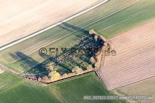 Alter jüdischer Friedhof von Trimbach (F-Alsace) - IMG_097823