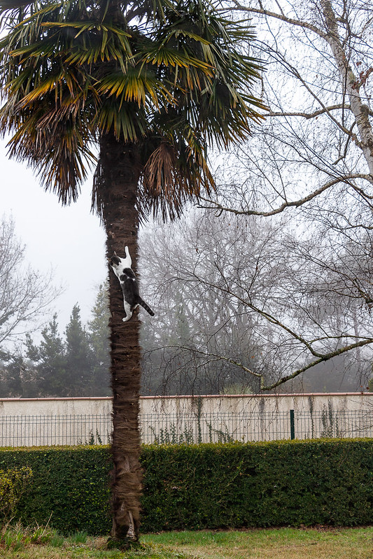 canelle et le palmier