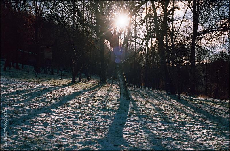 Wintermorgen (3)