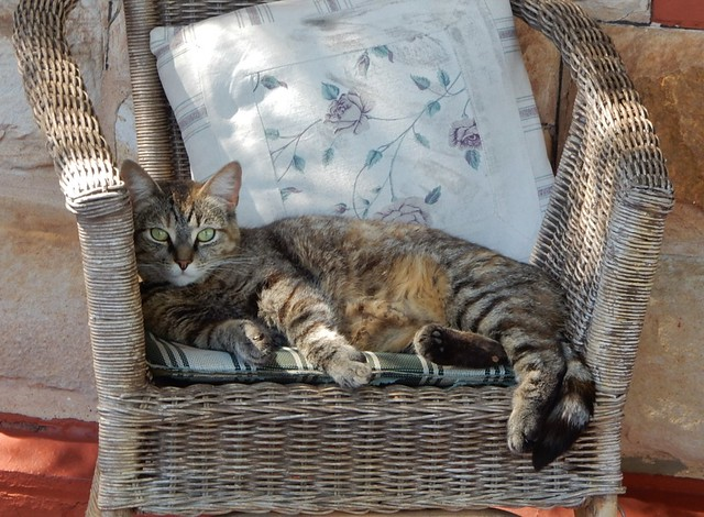 Blending in Perfectly with Its Wicker Chair