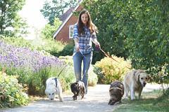 Dog Walking App like Uber
