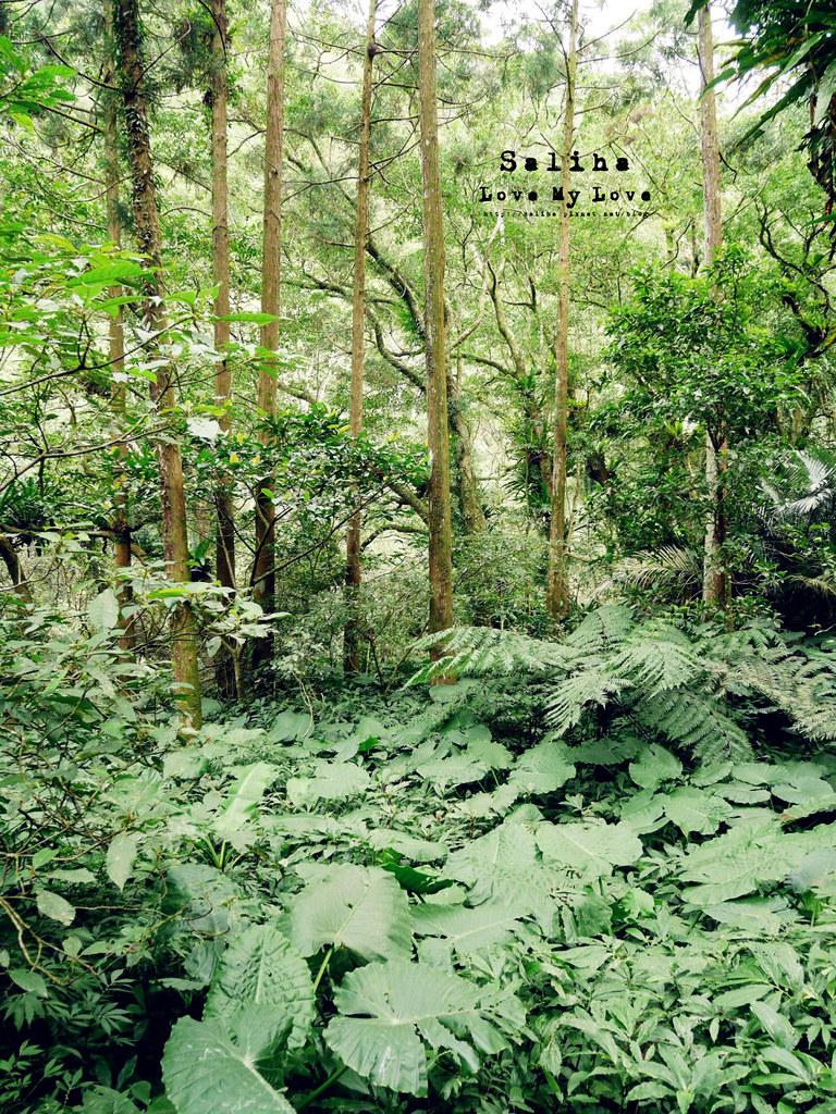 新北三峽一日遊踏青景點推薦滿月圓森林遊樂區 (23)
