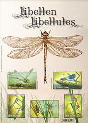15 LIBELLULES feuillet
