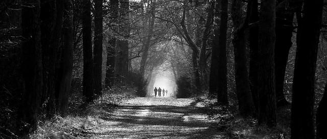 sentieri nel bosco - trails in the woods