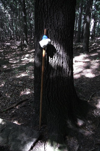 20100821 114 0101 Jakobus Baum Pilgerstab Eisbär