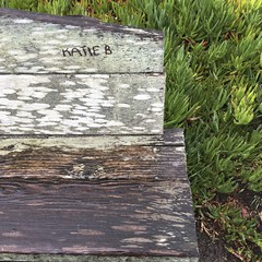 KATIE B/weathered wooden bench with ice plant