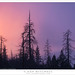 Dead Trees, Clearing Storm, Sunset by G Dan Mitchell