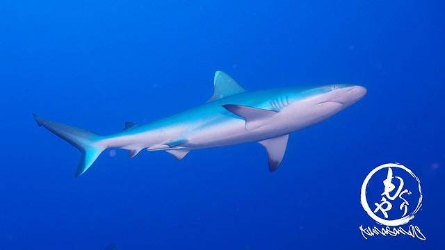 次から次へとサメのオンパレード♪