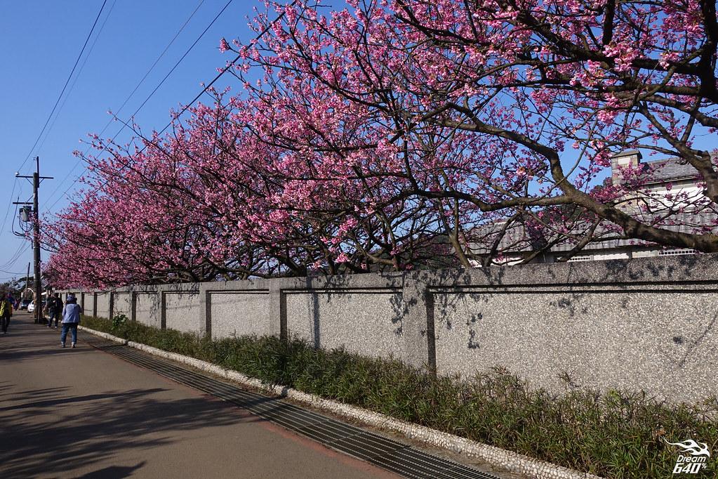 台北賞櫻-平菁街42巷-d2-08