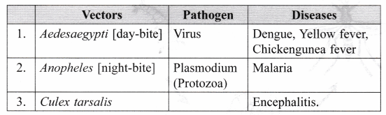 ncert-class-9-science-lab-manual-life-cycle-of-mosquito-9