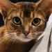 Cat by Dragan*
