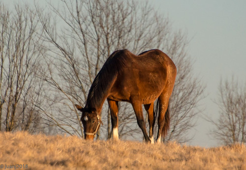 Horses of KY