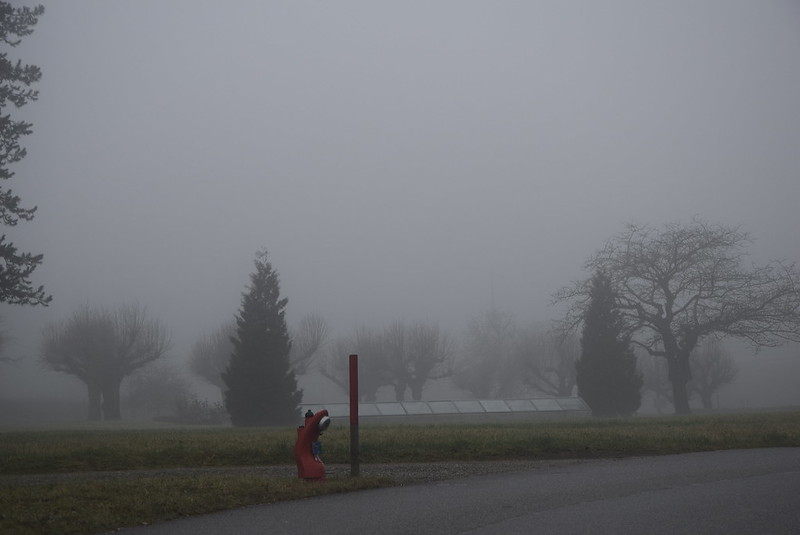 Road to Langendorf in the mist  (3)