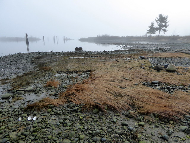 Royston shoreline, Vancouver Island, Panasonic DMC-ZS40