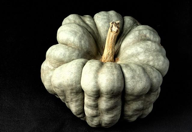 Green Pumpkin 'Shamrock' --9740