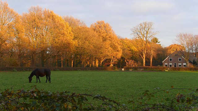Late autumn afternoon