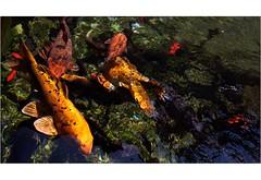 Fische im Aquarium der Vauban-Zitadelle in Besançon