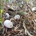 """Just found these eggs on the ground behind a plant. Any idea what kind of eggs they are? They're a little over 1"""" long. #12blaxx #eggs #gardenfinds"""