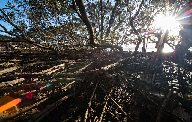 Flare in the mangroves