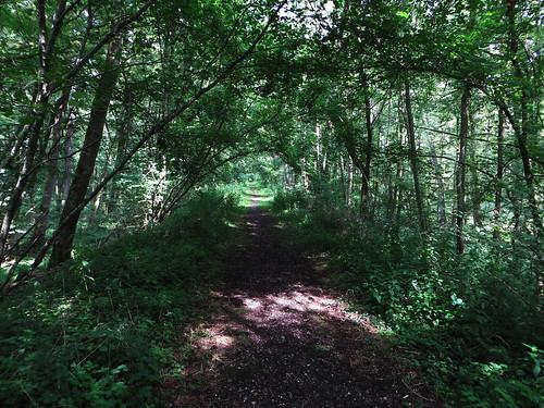 20140803 01 194 Jakobus Wald Weg Bäume Eisenbahngleise