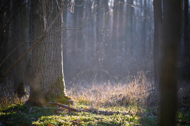Forest lights, Nikon D90, AF Zoom-Nikkor 80-200mm f/2.8D ED