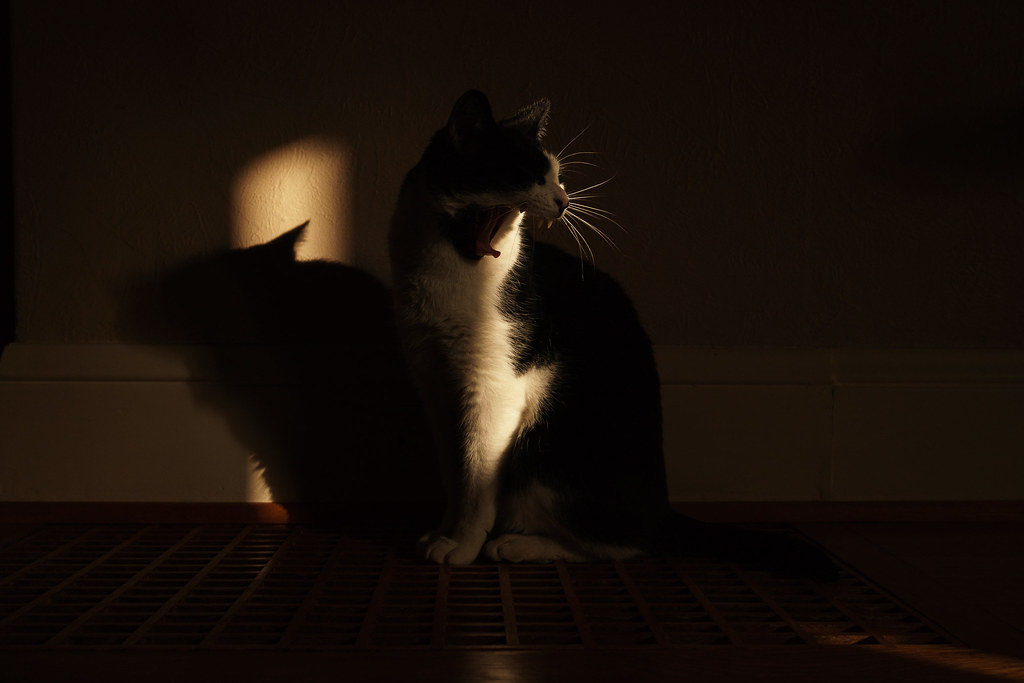 Our cat Boo yawns while sitting on the wooden grate as a narrow beam of light falls upon him