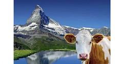Švýcarsko – velká cesta srdcem Alp