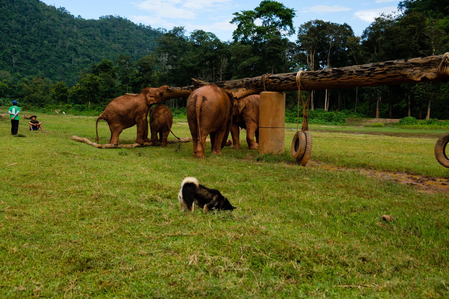 ChiangMai-Elephant-Sanctuary