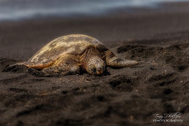 Sea Turtle, Nikon D810, AF-S VR Zoom-Nikkor 70-200mm f/2.8G IF-ED