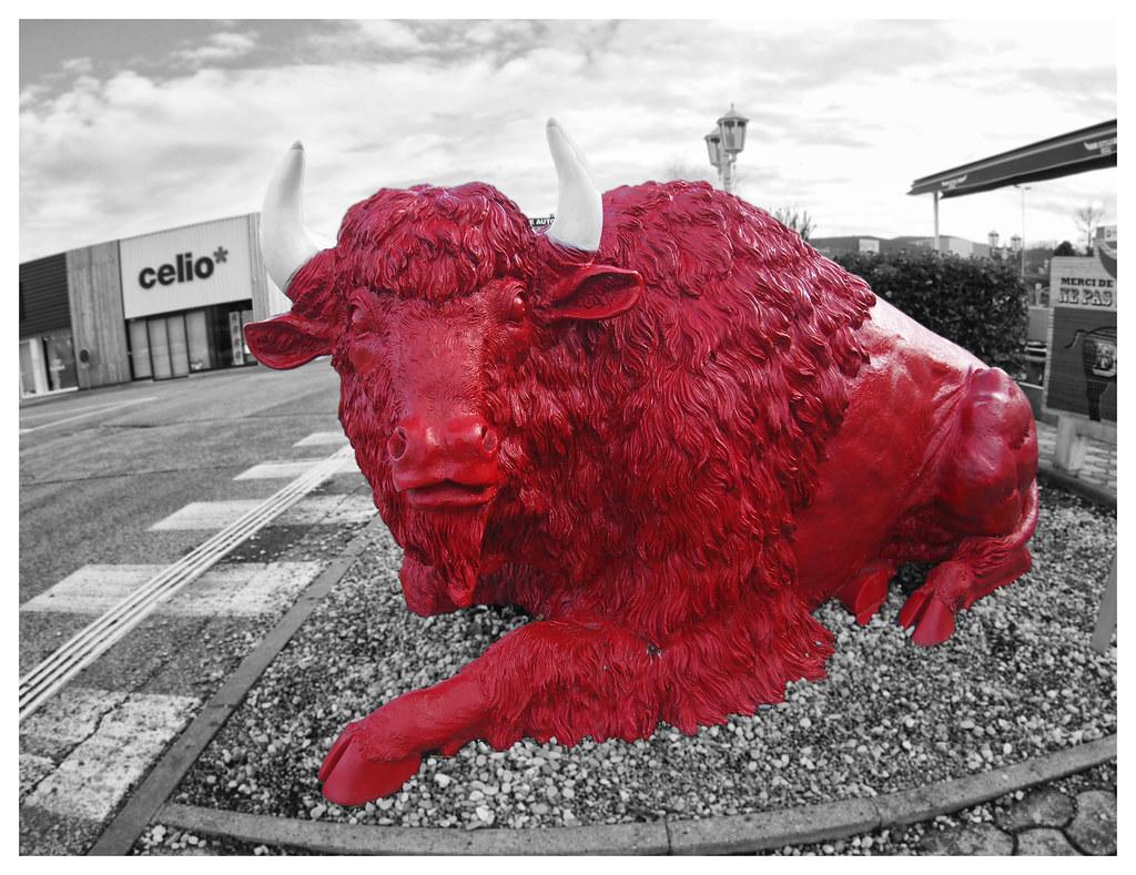 bison rouge