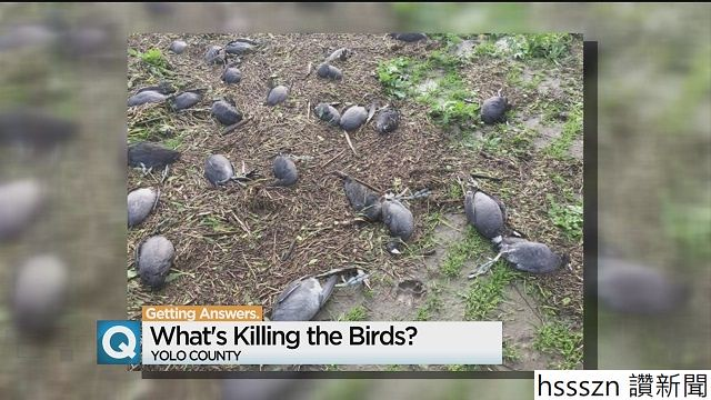 yolo-dead-birds_640_360
