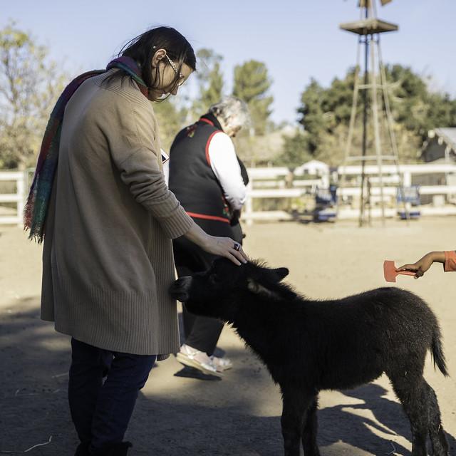 Animal Rescue Farm IV, Canon EOS 5DS, Canon EF 24-70mm f/2.8L II USM