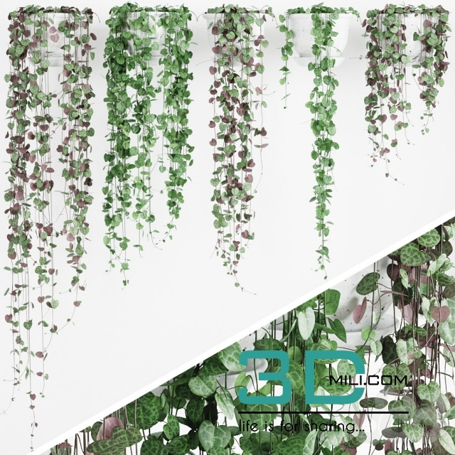 255  Wall Hanging Plant 3D model - 3D Mili - Download 3D