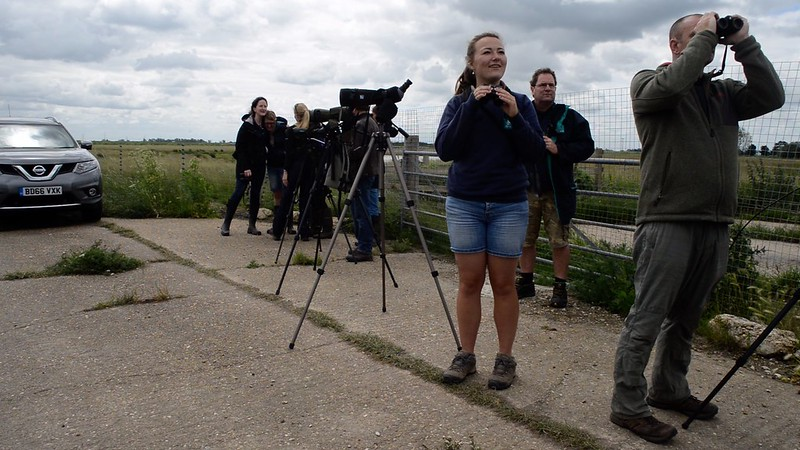 Project Godwit team observe birds after release WWT 2017