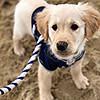 puppy06_mika