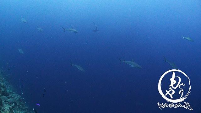次から次へとサメサメサメ!!!