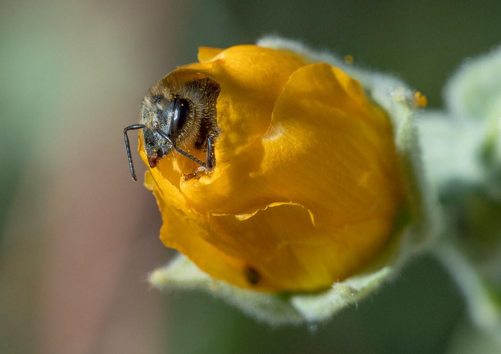 Bee_14