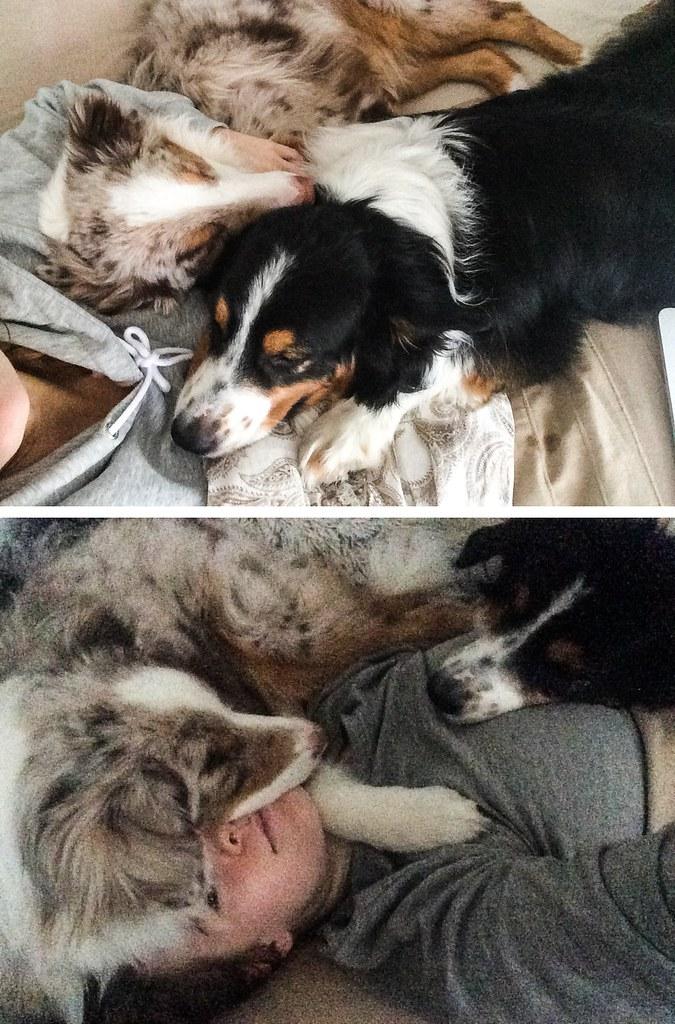 elämä kahden koiran kanssa-60-down