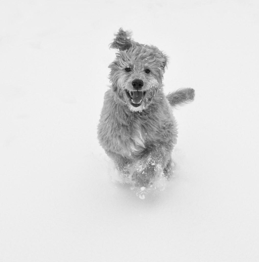 Love Snow Dog