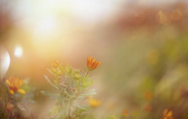 A January Flower..