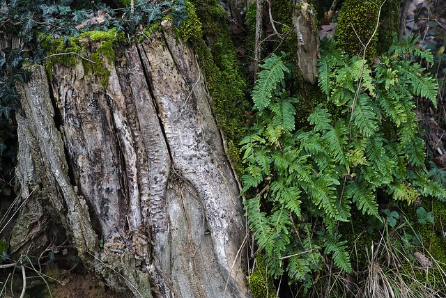 Wood and ferns