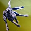 Jack rabbit takes off