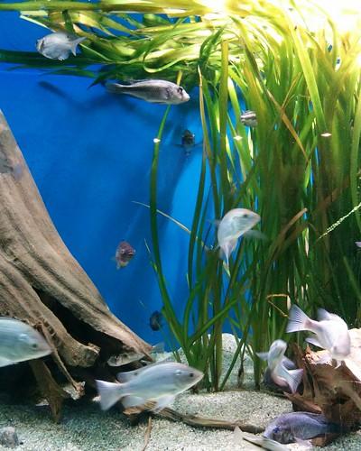 Ngege #toronto #torontozoo #fish #ngefe #latergram