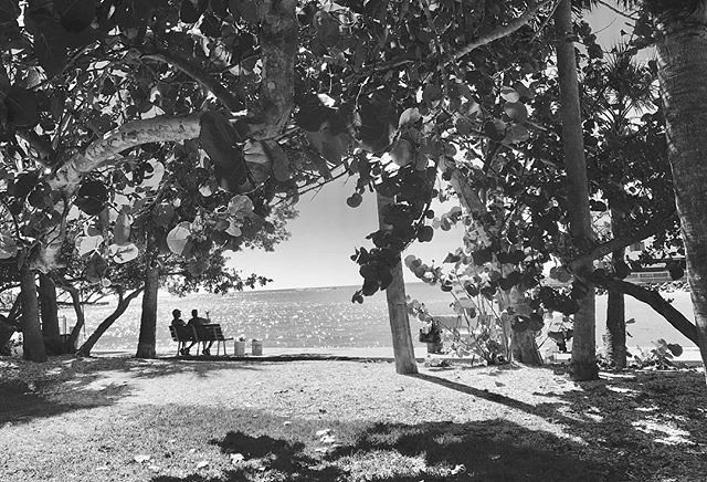 Another day in the #sun #daydream #sunny☀️ #sunnyday #tree #nature #perspective #instablackandwhite #stpetersburg #stpetersburgflorida #florida #tampabay