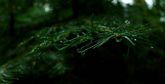 yosemite nat'l park, Canon EOS REBEL T4I, Canon EF-S 10-22mm f/3.5-4.5 USM
