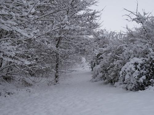 Quand la neige s'en vient